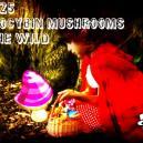 Los 25 hongos psilocibios más comunes en la naturaleza