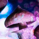 Tolerancia a las setas mágicas: todo lo que hay que saber