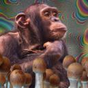 ¿Qué es la teoría del mono dopado y por qué es importante?
