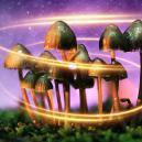 ¿De dónde sacaron su magia las setas mágicas?