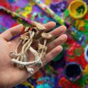 ¿Contribuyen Las Setas Mágicas A Potenciar La Creatividad?